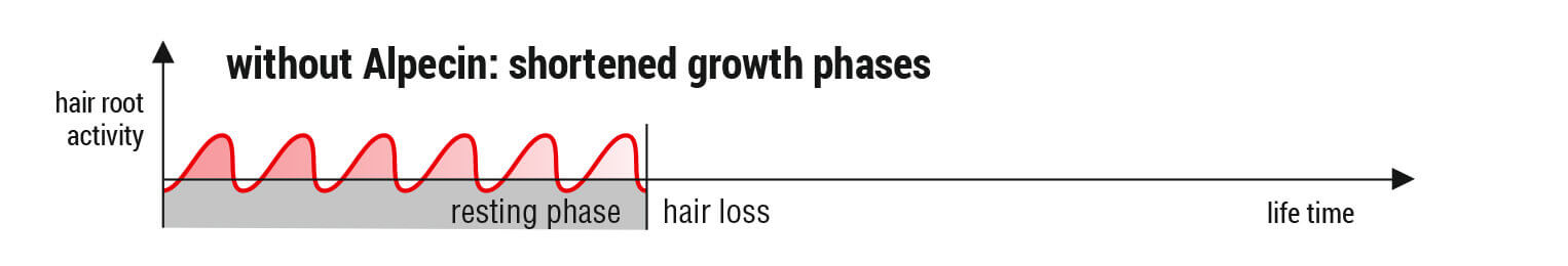 Hair root activity without Alpecin: shortened growth phases