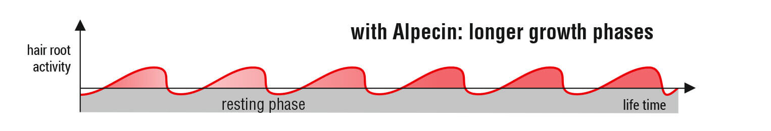 Hair root activity with Alpecin: longer growth phases